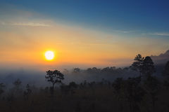 Photographer, sunrise, forest Stock Photos