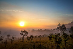 Photographer, sunrise, forest Stock Image