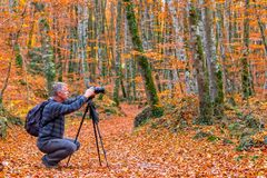 Photographer take pictures  of beautiful beech forest near town. Olot in Spain, La Fageda Stock Photo