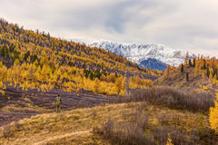 Photographer takes autumn landscape. In the mountains Stock Photography