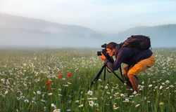 Photographer takes a pictures of a field with chamomiles Royalty Free Stock Photo
