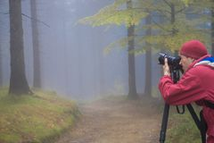Photographer takes pictures of the magic autumn forest in a dark royalty free stock image