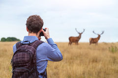 Photographer taking photo of wildlife. Man with camera and two deers in the nature Royalty Free Stock Photo