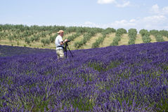 Photographer taking photos by the Plateau Valensole in Provence Stock Photography