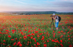 Photographer Taking Pictures Of Poppies In The Field Stock Image