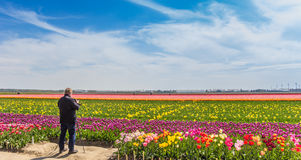 Photographer taking pictures of a tulips field. Photographer taking pictures of a dutch field of tulips stock photos