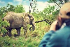 Photographer taking safari pictures Royalty Free Stock Photo