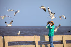 Photographer taking seagulls photo Stock Photo