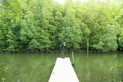 Photographer or traveler takes photos with digital camera. On wooden bridge in Mangrove forest Royalty Free Stock Image