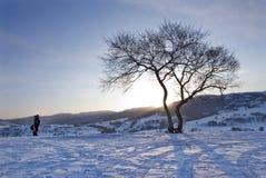 A photographer and a tree Stock Photos