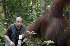 The photographer was frightened of an orangutan Stock Photos