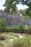 Photographer in Zion National Park Stock Photography