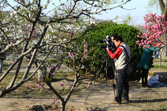 Photographers taking pictures of flowers Royalty Free Stock Images