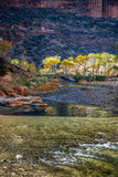 Photographers Walking along the Virgin River Royalty Free Stock Images