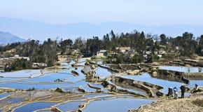 Photographes tirant des terrasses de riz Images stock