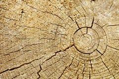 Photographic background - cut of wood log Royalty Free Stock Photo