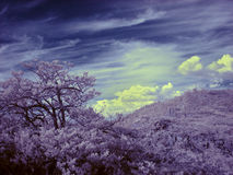 Photographie à infrarouge de montagne d'Ural du sud Photographie stock