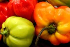 Photographie écossaise de la vie de poivrons ou de piments toujours de capot Image libre de droits