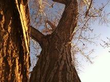photographie Image libre de droits