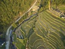 Photographie aérienne au paysage en terrasse de gisement de ressort Photos libres de droits