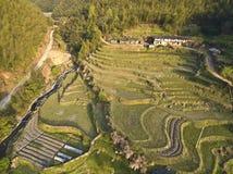 Photographie aérienne de paysage en terrasse de gisement de ressort Photos libres de droits