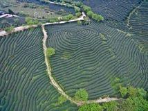 Photographie aérienne sur le paysage de jardin de thé de montagne Photo stock