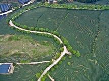 Photographie aérienne sur le paysage de jardin de thé de montagne Photographie stock