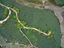 Photographie aérienne sur le paysage de jardin de thé de montagne Images libres de droits