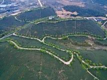 Photographie aérienne sur le paysage de jardin de thé de montagne Photos stock