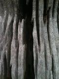 Photographie abstraite de tronc d'arbre Images libres de droits