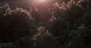 Photographie au coucher du soleil banque de vidéos
