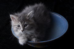 Photographie courante d'un chaton images libres de droits