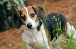 Photographie d'adoption de chien de race mélangée par briquet Photographie stock