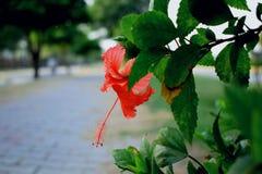 photographie d'Ahmed de jawad Photographie stock