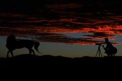 Photographie d`amour. Photographie cheval Coucher du soleil Art Caméra Nature Animal Voir Voyage Royalty Free Stock Photography