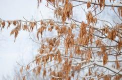 Photographie d'art Branches d'arbre rythmiques en hiver Ornement naturel Bel hiver images stock