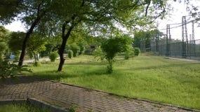 Photographie d'herbe d'arbres de maison verte de jardin Photos stock