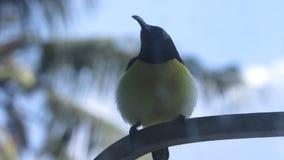 photographie d'oiseau par le verre de fin de fenêtre vers le haut de jaune de tir Photos libres de droits