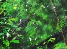 Photographie d'oiseau sous la pluie image stock