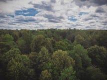 Photographie de bourdon de voûte de forêt images stock