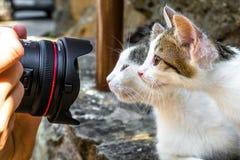 Photographie de deux chats Photographie stock