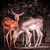 Photographie de faune photos stock