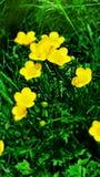 Photographie de fleur Photos libres de droits