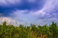 Photographie de minimalisme de paysage de soirée d'été/belles fougères vertes dans le premier plan avec le beau ciel nuageux bleu Photographie stock