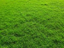 Photographie de mobile de champ d'herbe photo stock