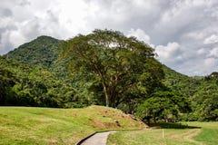 Photographie de nature, détendant au Venezuela image libre de droits