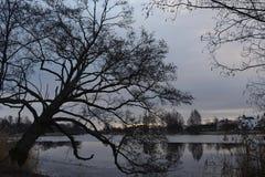 Photographie de nature en Suède image stock