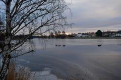 Photographie de nature en Suède photographie stock libre de droits