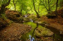 Photographie de paysage d'automne/petite crique traversant une vallée dans la forêt Photographie stock