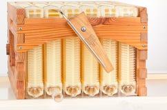 Photographie de studio de ruche d'écoulement superbe et de vues Photo stock